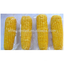 Long-term supply high quality frozen iqf sweet corn cob