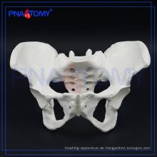 PNT-0112 weibliches Beckenknochenmodell für Krankenhaus