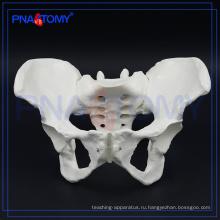 ПНТ-0112 женского таза костный модель для больницы