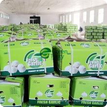 Jetzt China-landwirtschaftliche Produkt-frischer normaler weißer Knoblauch