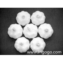 Nouvelle culture d'exportation de bonne qualité d'ail blanc