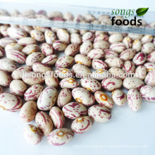 Dried Beans, Kinds of Beans