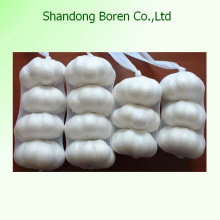 Normal White Garlic Export to Foreign Countries