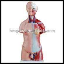 Modelo de torso anatômico de sexo duplo de ISO 45CM com órgãos internos 23 partes