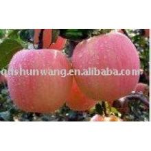 Chino fresca manzana Fuji, frutas manzanas