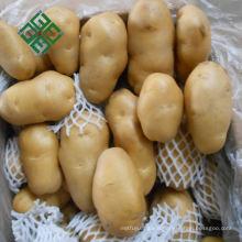China Fresh Potato Export Products 100g Fresh Potato