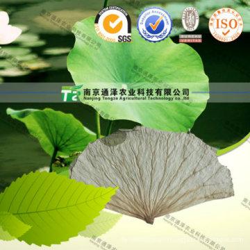 Weight Loss Herbal Medicine Lotus Leaf