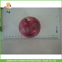 Getrocknete rote Zwiebel Frische Gemüse Zwiebel Mesh Bag