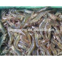 Vente chaude bonne fonction d'alimentation animale pour la crevette