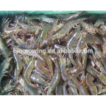 Hot sale good function animal feed for shrimp