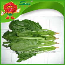 China supplier Bulk fresh spinach brands