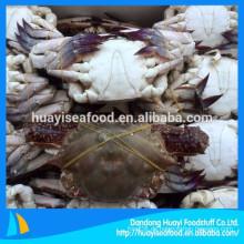 Liefern ganze Runde gefrorene neue Landung blaue Schwimmen Krabbe