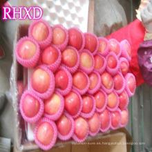 China nueva temporada manzana fruta fresca roja fuji apple con el mejor precio