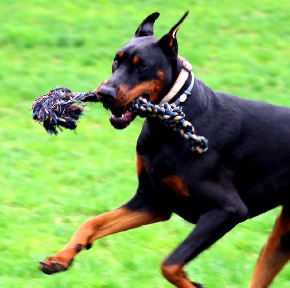 Large Breed Dog Rope Toys