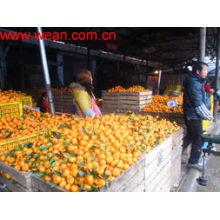 Naranja nanfeng