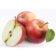 Fournisseur d'or pour la pomme rouge fraîche chinoise