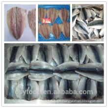 frozen mackerel flaps (scomber japonicus butterfly)