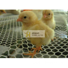 Plastic Extruded Mesh/Plastic Flat Net Used for Poultry, Duck, Chicken