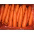 250-300g New Crop Fresh Carrot
