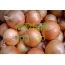 Export Légumes frais Bonne qualité Oignon jaune