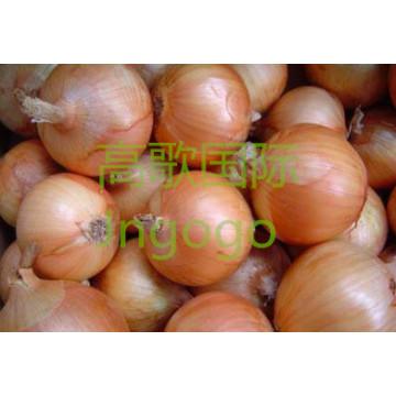 Export Frisches Gemüse Gute Qualität Gelbe Zwiebel