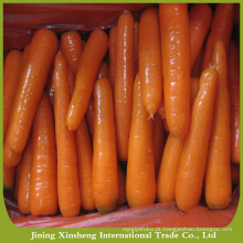 Fazenda, fresco, cenouras