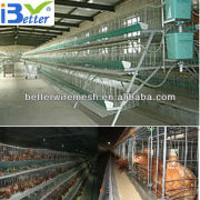 Hot-Sale BT factory A-128 chicken cage poultry farm(Welcome to Visit my factory)