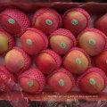 Fornecedor regular de maçã vermelha de Qinguan