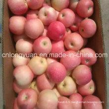 Carton de 20 kg Nouvelle pomme de Gala rouge fraîche