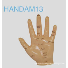 Handam13,Acupuncture Model