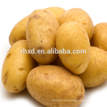 Chinese sweet potato at best prices