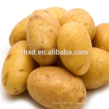 Китайский сладкий картофель по лучшим ценам