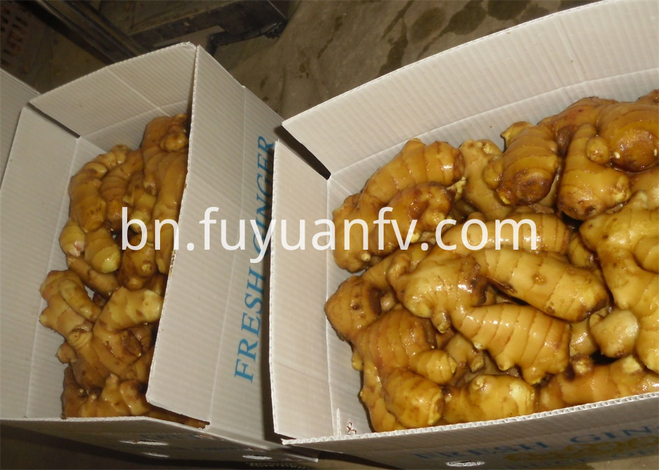 Shandong fresh Ginger
