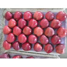 buy fresh apple fruit /huniu apple in bulk wholesale apple fruit