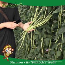 Suntoday légume assortiment de légumes légumes moissonneuse hs code F1 Bio niébé vert graines de haricot longue cour (41001)