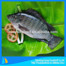 we mainly supply frozen tilapia fish to the global market