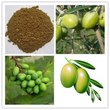 Extrait de feuille d'olivier d'hydroxytyrosol oleuropéine