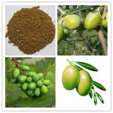 Oleanolic acid hydroxytyrosol oleuropein extrato de folha de oliveira
