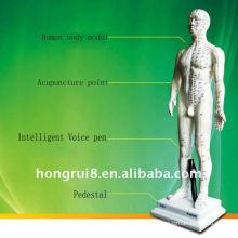 Human Intelligent modelo de punto de acupuntura de voz y cuerpo