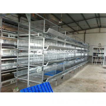Poultry equipment for quail