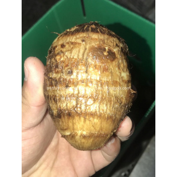fresh sweet taro for sale