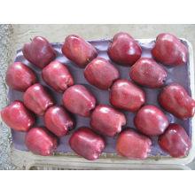 Importadores de frutas frescas con delicioso huerto de manzanas