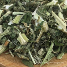 motherwort  Chinese herbal medicine