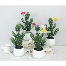 mini succulent plants / home decorative mini cactus bonsai