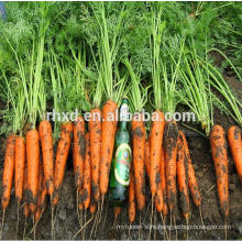 China carrot per ton with carrots wholesale price