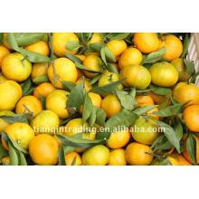 Китайский мандарин апельсин
