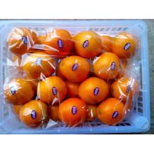 Köstliche Frucht erste Qualität Nabel Orange