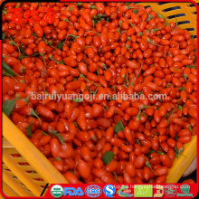Goji berries and blood pressure raw goji berries benefits goji berries benefits and side effects