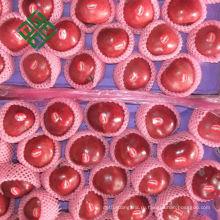 китайские яблоки Фуджи фабрика свежего яблока на рынке
