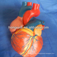 Modelo de corazón ISO Jumbo, modelo de corazón anatómico, modelo de corazón médico